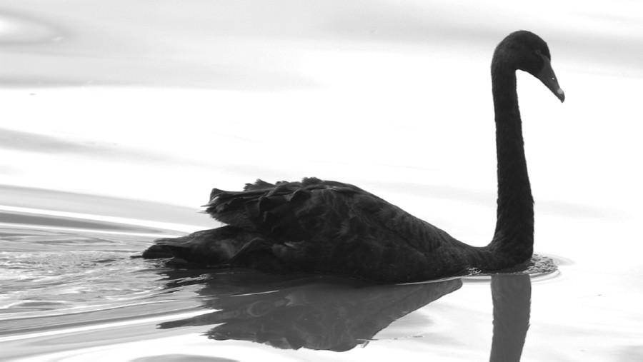 Forex black swan